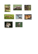 Animals-from-Nottinghamshire_1-(1).docx