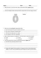 Cell-division-homework-(standard).docx