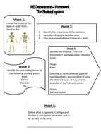 Homework---The-skeletal-system.pptx