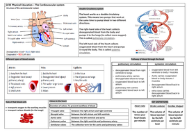 OCR GCSE PE knowledge organisers + homework sheets (Anatomy and Phsyiology)