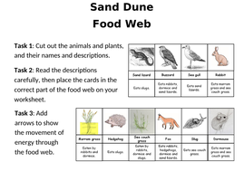 Sand-dune-food-web-worksheet-with-answers.docx