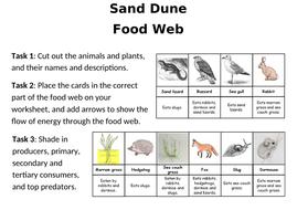 Sand-dune-food-web-worksheets.docx