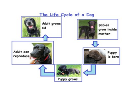 1.1_1.2_life-cycle-of-a-dog.docx