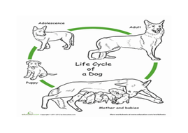 1.1_colouring-in-life-cycle.docx