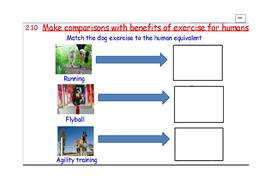 2.10_exercise-for-dog_humans_comparison.docx