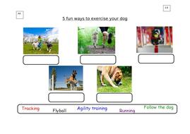 2.9_10-fun-ways-to-exercise-your-dog_AA_LA.docx