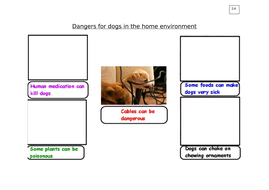 3.6_Dangers-for-dogs-in-the-home-environment.docx