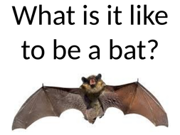 What-is-it-like-to-be-a-bat.pptx