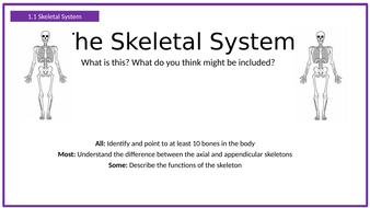 The-Skeletal-System.pptx