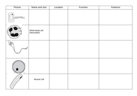 Specialised-cells-grid.docx