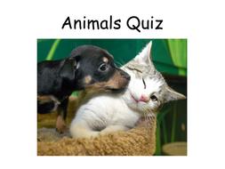 6.-Animals.pptx