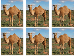 Camels-x-6.pptx