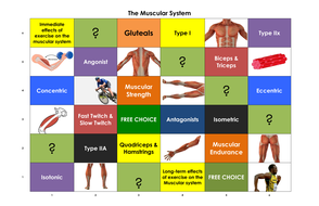 The-Muscular-System-Learning-Grid.pdf