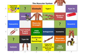 The-Muscular-System-Learning-Grid.docx