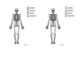 Flat-Bones-Diagram-Colour-in-Task.docx