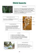 Lesson-8---adding-punctuation-marks.pdf