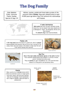 Lesson-6-Information-Text---Dogs.pdf