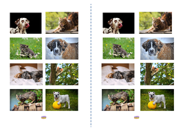 Lesson-5---Pictures-of-dogs-and-cats.pdf