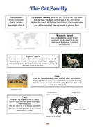 Lesson-6-Information-Text---Cats.pdf