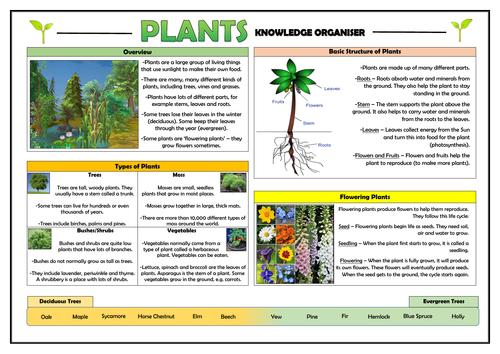 Year 1 Plants Knowledge Organiser!