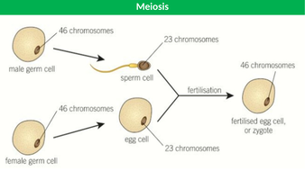 Mitosis-and-Meiosis-TES.pptx