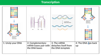 Transcription-and-Translation-Support-TES.pptx