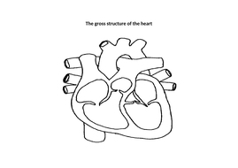 Gross structure of the human heart (AQA A-level Biology ...