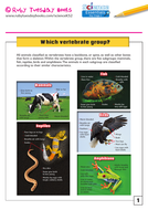 Which vertebrate group?