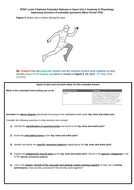 BTEC level 3 Unit 1 Anatomy & Physiology, Learning Aim B muscular system complete revision bundle