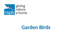 Photograph-pack---Garden-and-Sea-birds.pptx