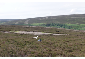 Photograph-Pack--Hen-harriers-images.pptx