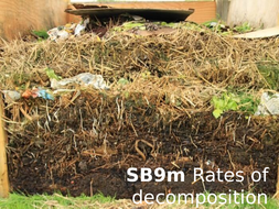 SB9m-Rates-of-decomposition.pptx
