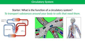 Circulatory-system-HN.pptx