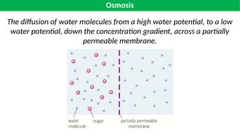 Osmosis-TES.pptx