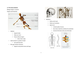 Notes: Cambridge Checkpoint and Beyond - Biology Secondary 1 (Year 7) Chapter 2 Humans