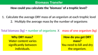 Pyramids-of-Biomass-TES.pptx