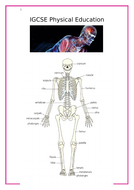 Anatomy---Physiology-Workbook-Answers-2020.doc