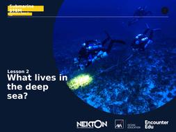 Submarine STEM KS2: What lives in the deep sea?