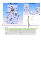 Bone-Task.docx