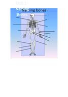 Bone-Naming-Starter.docx