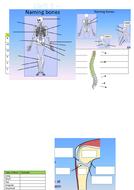 Bone---Joint-Task.docx