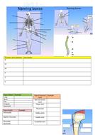 Bone---Joint-Task-2.docx