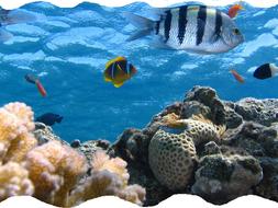 Under-water-pic-spur.jpg