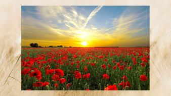 Remembrance_day_assembly_1.pptx