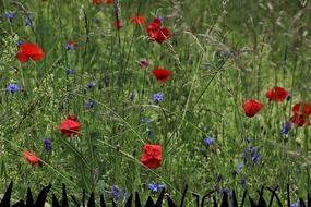 Meadow-spur.jpg