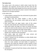 The-Carbon-Cycle-Information.docx