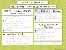 B2-investigating-enzymes.pdf