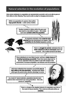 Lesson-3---Natural-selection-and-Evolution-Information-Sheet.doc