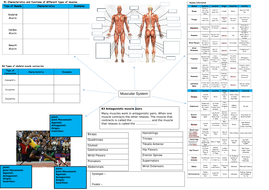 Muscular-System-Spider-Diagram.docx