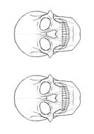 skull-Outline.pdf